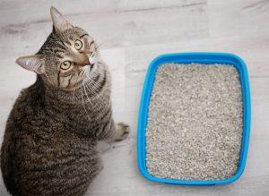 Kitty Litter Box Problems